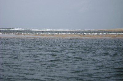 arrival of migratory birds.jpg