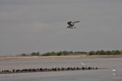migratory birds that vist the site.jpg