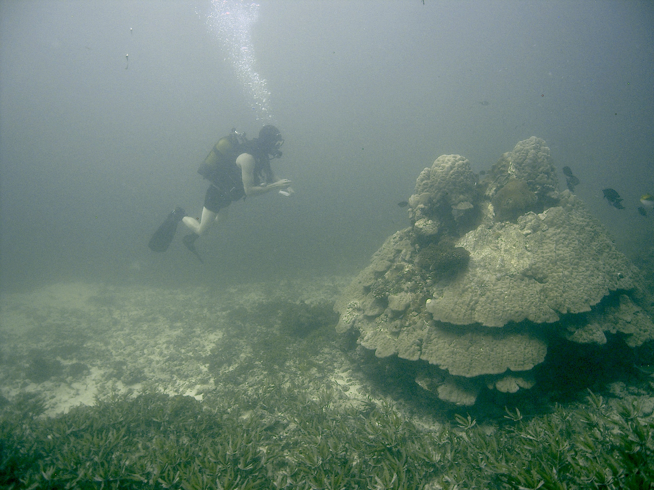 Fish Survey Watamu Photo 2.jpg