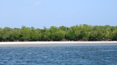 Mida creek mangroves.JPG
