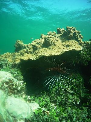 RMRM Reef Assessment Photo 2.jpg