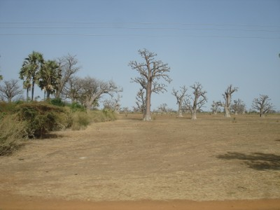 inland-from-the-coastline-this-is-a-typical-landscape.jpg