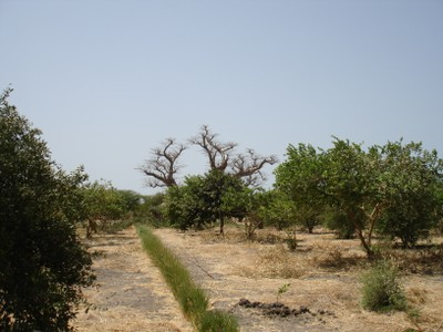 irrigated-fruit-trees-near-the-demo-sites.jpg
