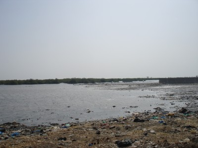 mangrove-area-with-high-level-of-solid-waste-pollution.jpg