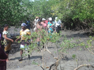 Community members on mangroves area.JPG
