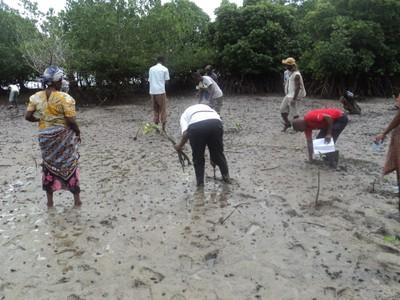 Community planting the mangroves.JPG
